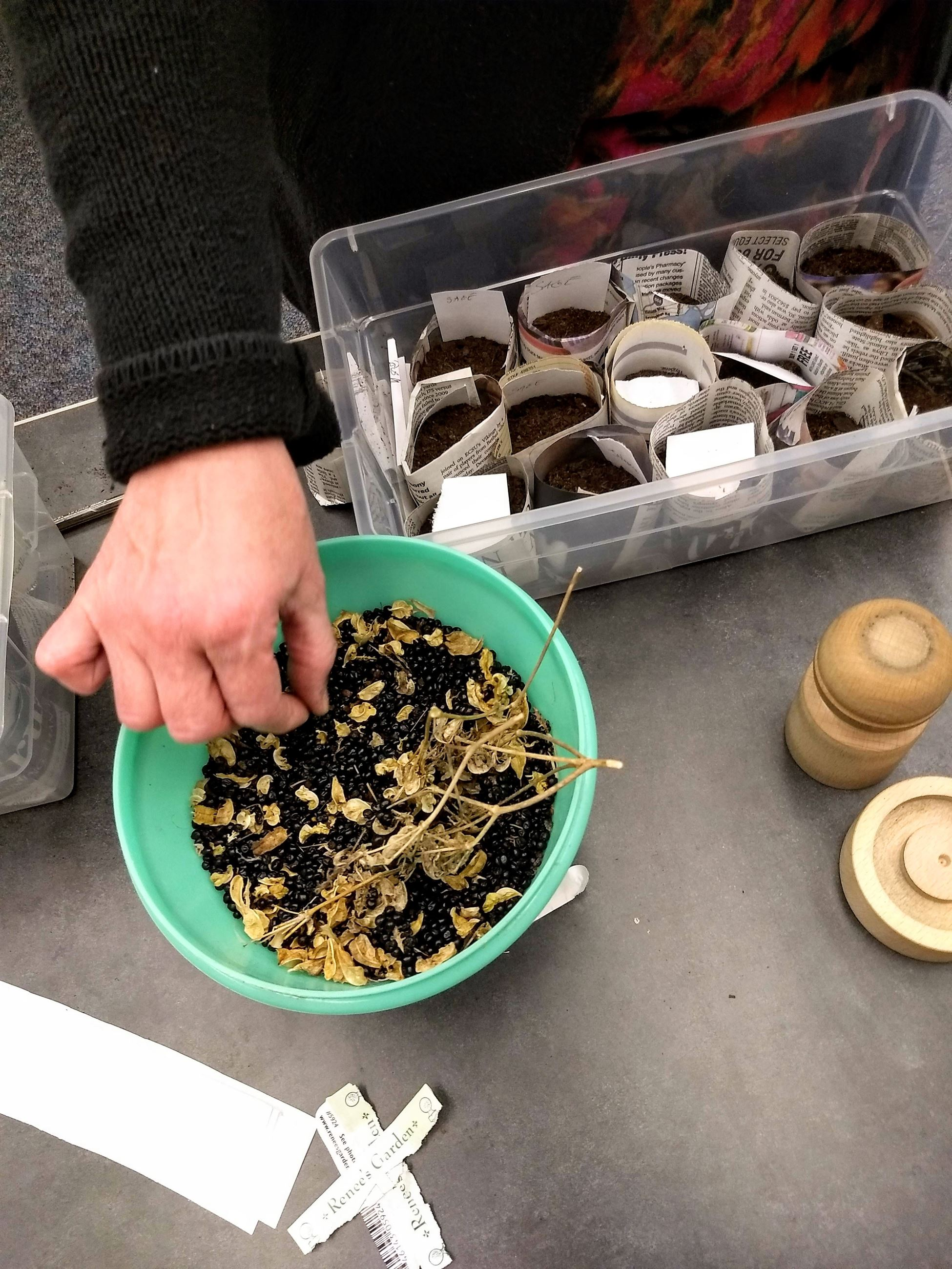 Seeds were provided for free from the Virginia Cooperative Extension and the York County Master Gard